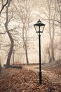 Street lamp in misty autumn forest park dim Stock Photo