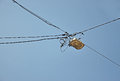 Street lamps on wires with blue sky Royalty Free Stock Image