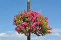 Street light with petunia flowerbed kiev ukraine Royalty Free Stock Images