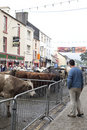 Street Livestock Sale Puck Fair Royalty Free Stock Photo
