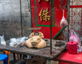 Street meat market with a pigs head in an alley bangkok thailand Stock Photography