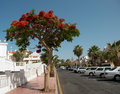 Street of Playa de las Americas Royalty Free Stock Photo