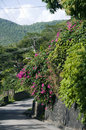 Street scene bequia flowers and wall Stock Photography