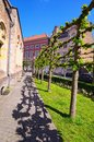 Street with vintage stone houses and unusual trees. Beautiful landscape photo of spring city. Bruges dutch: Brugge, Belgium Royalty Free Stock Photo