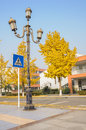 Streetlamp and crossing sign a at the zebra of a street with yellow gingkoes aside in chengdu china Royalty Free Stock Image