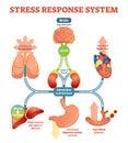 Stress response system vector illustration diagram, nerve impulses scheme. Royalty Free Stock Photo