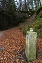 Stretch of the santiago`s way with beautiful leaves