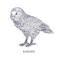 Strigops habroptila - Kakapo, owl parrot. Vector illustration, bird with conservation status.