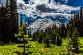 A Striking View of an Alpine Paradise on Mount Rainier. Stock Image