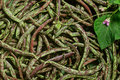 String beans Royalty Free Stock Photo