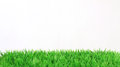 Stripe of fresh green grass on white background Royalty Free Stock Photo