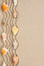 Stripe of seashells lying on the sand with space for text Royalty Free Stock Photos