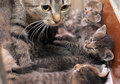 Striped cat with cute kittens Stock Photography