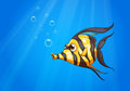 A striped colored fish under the sea illustration of Stock Images