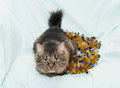 Striped fluffy siberian cat is looking up on background of golden christmas garland Stock Photo