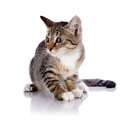 Striped scared kitten not purebred on a white background small predator small cat Stock Photography