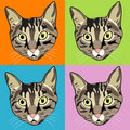 Striped Tabby Cat Faces Royalty Free Stock Photography