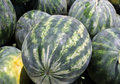 Striped watermelons Stock Photos