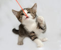 Striped and white kitten playing on gray Royalty Free Stock Photo