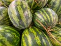 Stripped watermelons for sale at groceries store