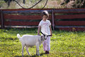 Stroking goat little girl years old a on farm Royalty Free Stock Images