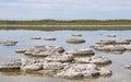Stromatolite Clusters