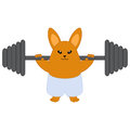 Strong bunny holding a barbell isolated on white Royalty Free Stock Photos