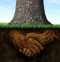 Strong Business Roots Royalty Free Stock Photo