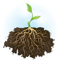 Strong foundation vector illustration of a fresh young plant with roots Royalty Free Stock Photo