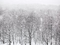 Strong snowing over woods in winter Royalty Free Stock Photo