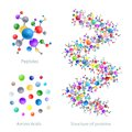 Structure of protein, peptides, amino acids, vector Royalty Free Stock Photo