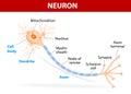 De típico neurona