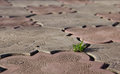 Struggling a tiny bush of grass to survive by growing through the concrete tile shallow dof Stock Photos