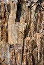 Struttura di superficie di legno fossile Fotografia Stock Libera da Diritti