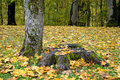 Stub with orange leaves photo of a in the forest sigulda nature Stock Photography