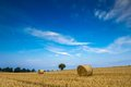 Stubble field with straw bales Royalty Free Stock Photo