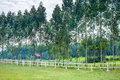 Stud farm empty in forest Royalty Free Stock Photography
