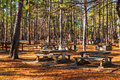 Studdard Picnic Area in Stone Mountain Park, Georgia, USA Royalty Free Stock Photo