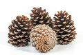 Studio Shot Cluster of Four Old  Pine Cones Royalty Free Stock Photo