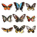 Stuffed insects butterfly collection set Royalty Free Stock Photography