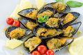 Stuffed mussels dish of cooked filled with breadcrumbs Stock Images
