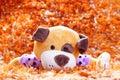 stuffed puppy lying on orange background Royalty Free Stock Photo