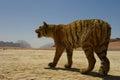 Stuffed tiger in the desert in jordan Stock Images