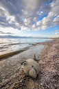 Stuffed toy fish on shore of Salton Sea Stock Images