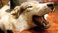 Stuffed wolf's eye Royalty Free Stock Photo
