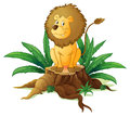 A stump with a big scary lion illustration of on white back ground Royalty Free Stock Photos