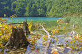 Stump and fallen tree in a lake unspoiled wild nature national park plitvice croatia Stock Photography