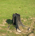 Stump a on green grass Royalty Free Stock Image