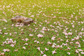 Stump with Pink flowers fall on grass. Royalty Free Stock Photo