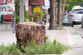 A stump from recently cut big tree on sidewalk Royalty Free Stock Image